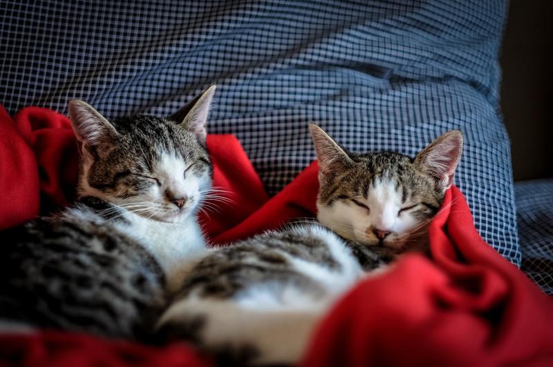 A Look At Cat Breeds