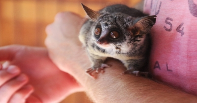 Setting The Stage For Your Exotic Pet