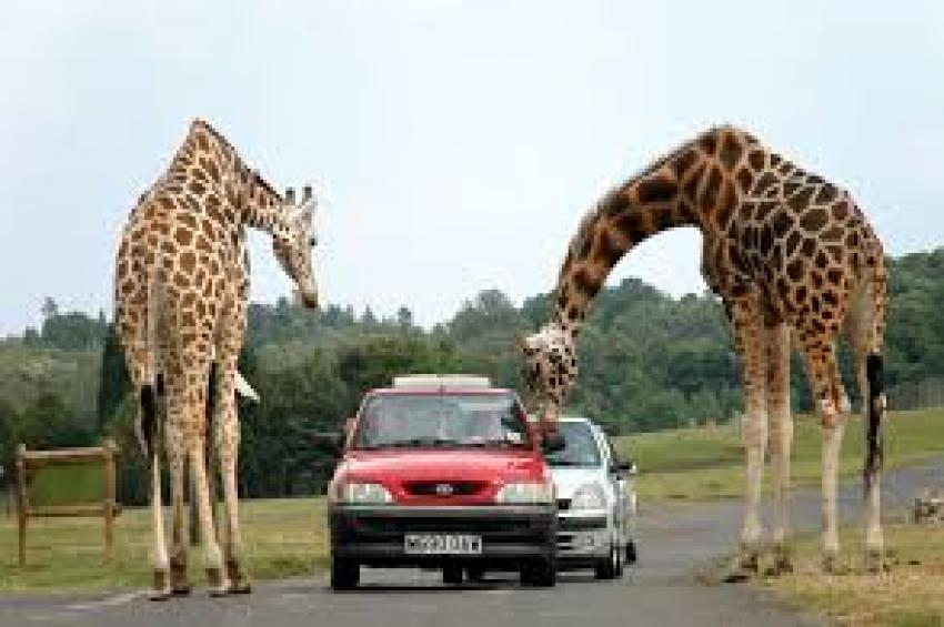 Safari Travel Tips